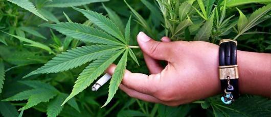 Избавиться от марихуаны в Колорадо предлагают в аэропорту