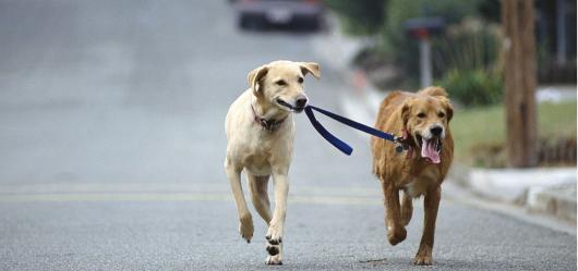 В Берлине изменят правила выгуливания собак