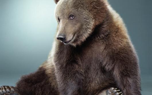 Словакию атакуют медведи