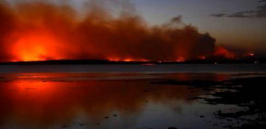 В Австралии сгорели сотни тысяч гектаров леса