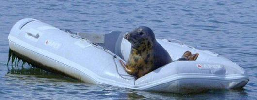 Молодожены нашли тюленя в своей надувной лодке