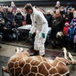 «Убийцам» жирафа Мариуса в Дании угрожают расправой