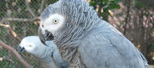 Авиакомпания «Россия» транспортировала Алматинский зоопарк в Калининград