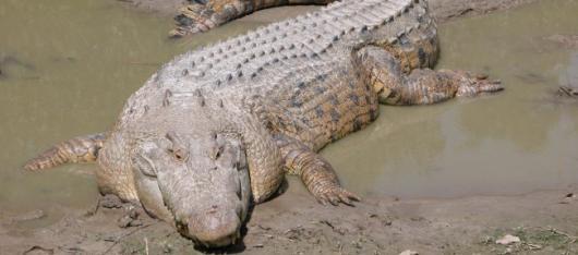 Крокодил убил ребенка в австралийском национальном парке