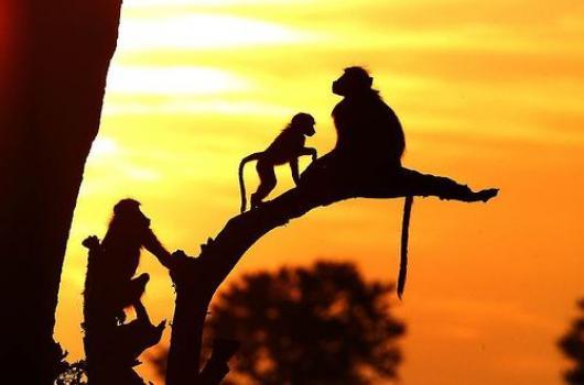 Африканский союз введет новые налоги для туристов
