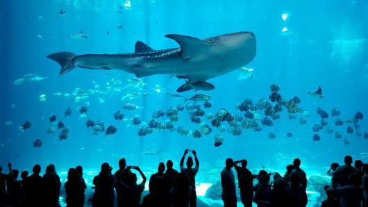 Крупнейший океанариум вскоре порадует гостей и жителей столицы