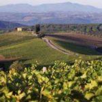 Тоскана названа лучшим регионом для винного туризма