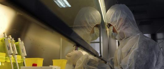 Новая вспышка птичьего гриппа в Китае 2013