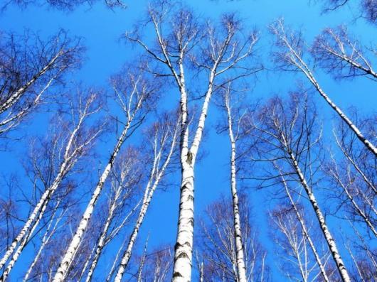 Ноябрьские праздники удивят россиян теплой погодой