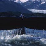 Китовое пиво в Исландии попало под запрет